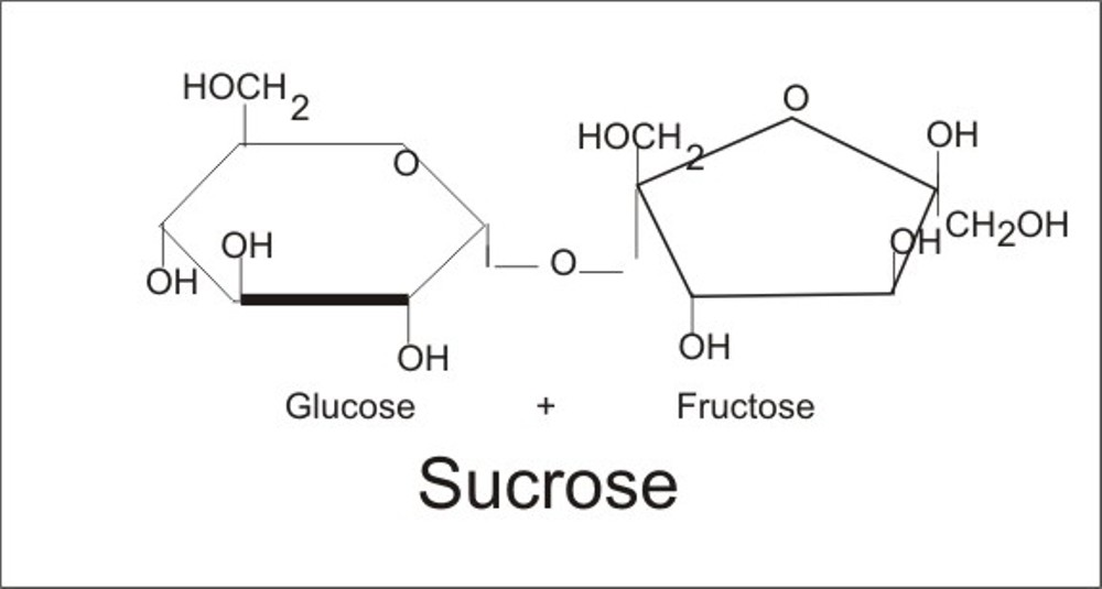 Image Gallery disaccharide sucrose