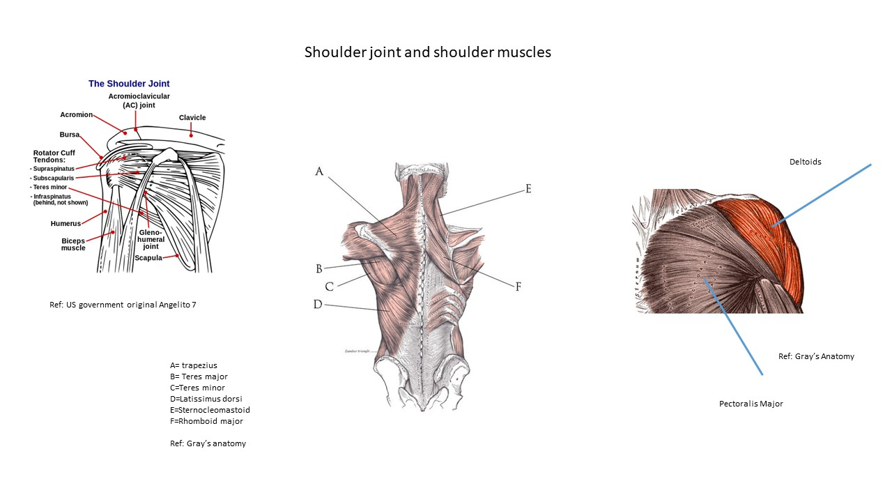 Shoulders exercises to do at home your shoulder joint and shoulder muscles pooptronica