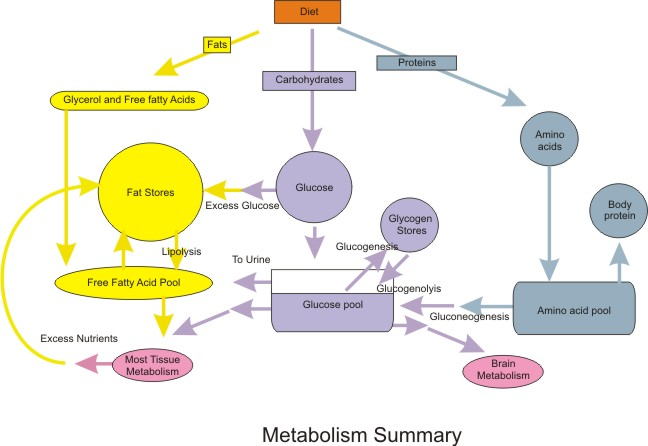 metabolism energy and nutrient requirement