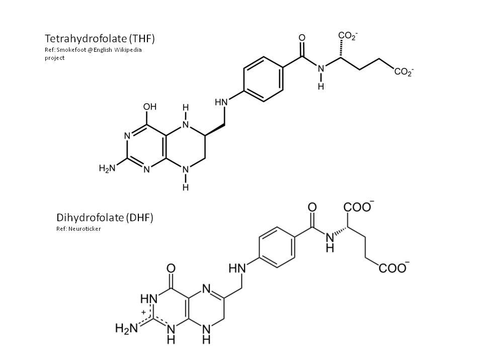 Folic Acid Wikipedia The Free Encyclopedia